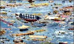 The information was never released to the public that the Plane had crashed directly into the Giant Ocean Buoy which marked the Ocean Passage. The steel buoy's girders sliced through the plane and cut everything into tiny pieces. A soup of 'guts' marked the spot where the plane crashed and the buoy sank.